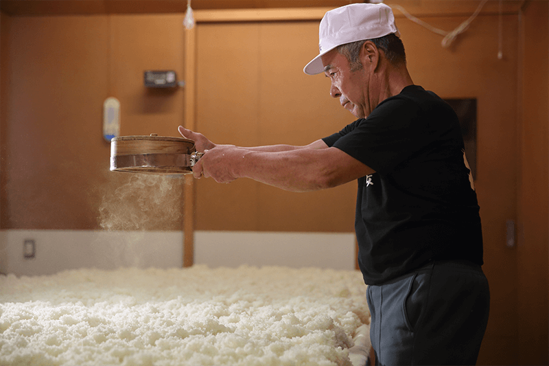 Making koji